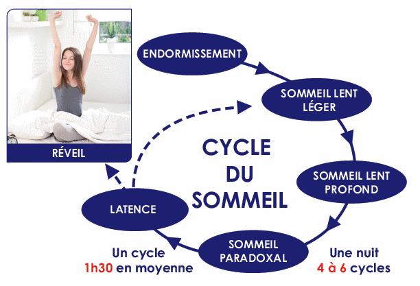 schema cycle sommeil