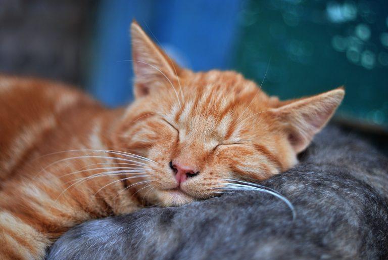 dormir hypno