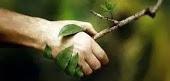 Naturopathie : Quels bienfaits pour quels troubles?