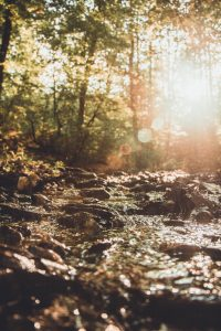 rivier nature