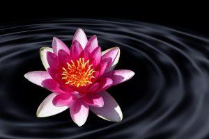 fleur zen merlet