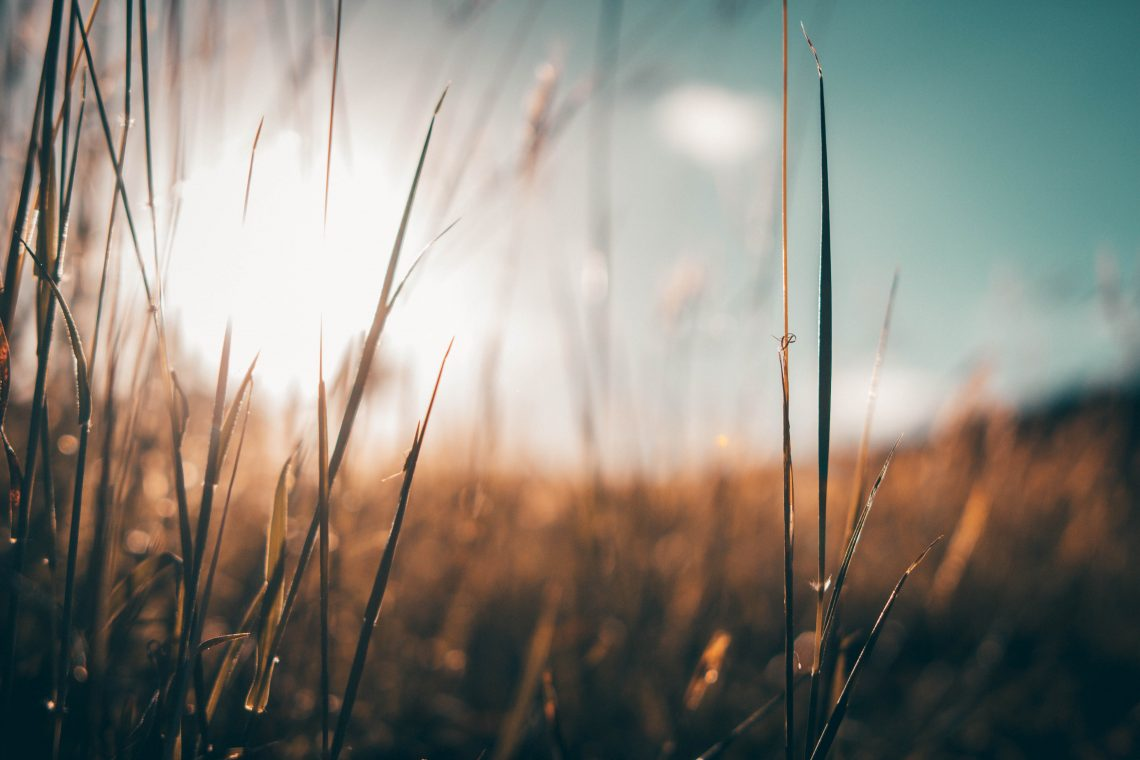 photo soleil champ