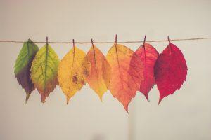feuilles zen