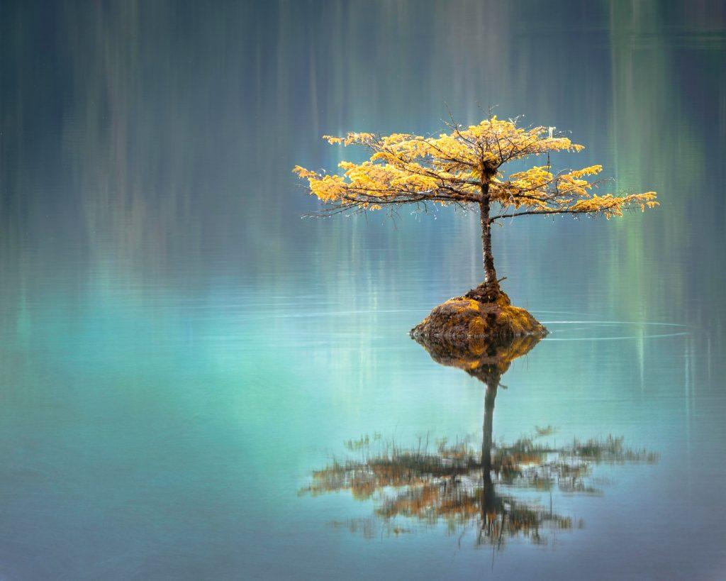 photo_arbre_zen