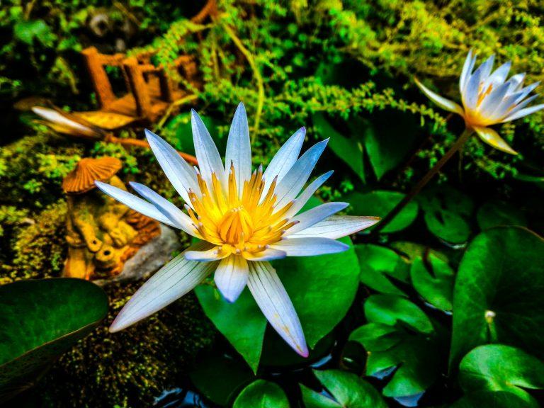 photo jardin zen