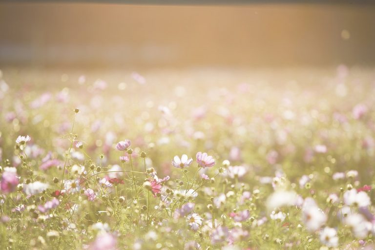 photo paysage de fleurs