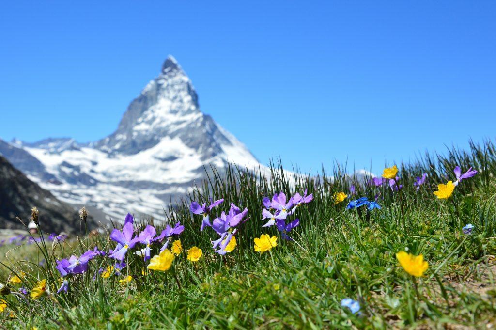 photo fleurs alpes