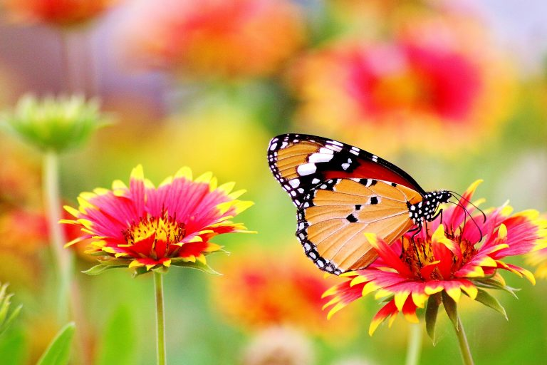 photo nature papillon