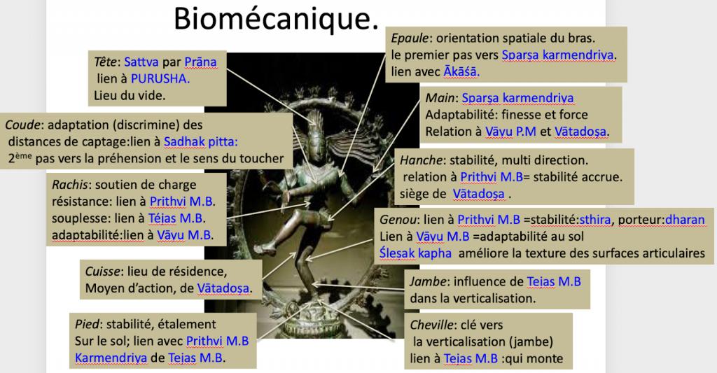 Joël Tougourneau schema biomécanique