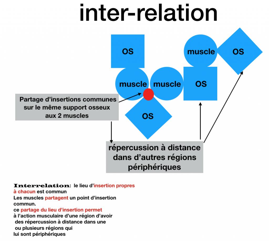 Joël Tougourneau schema inter-relation