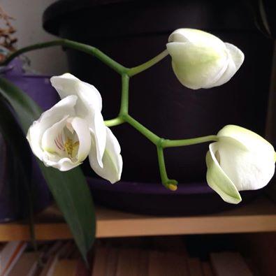 photo fleurs cabinet Sophie Brunel