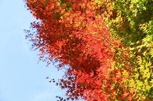 feuille zen automne