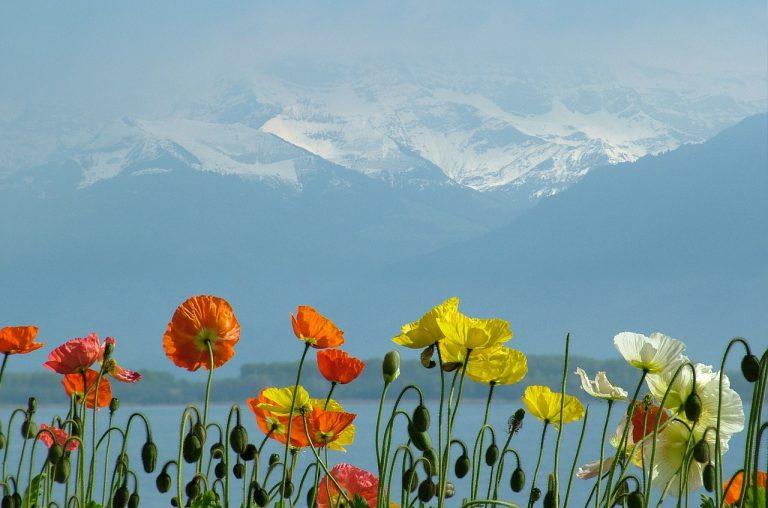 photo fleurs lac léman